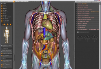 3d атлас анатомии человека онлайн на русском